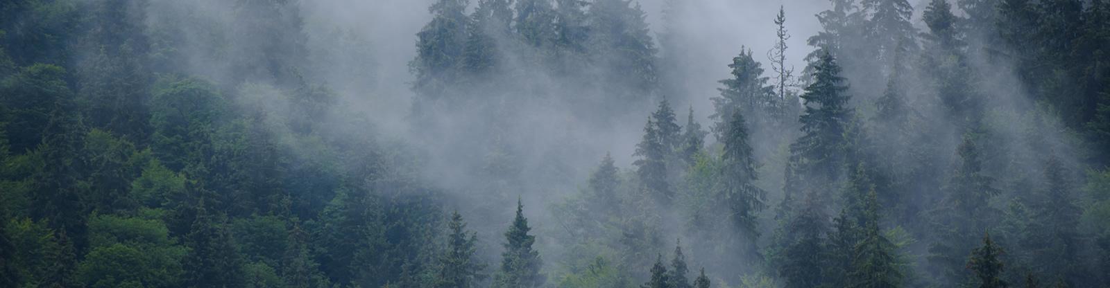 Cuando baja la niebla